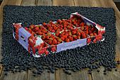 Strawberry box 5 kg