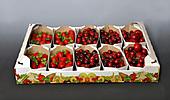 Obst und Gemüsesteige (5kg) im Format 60/40